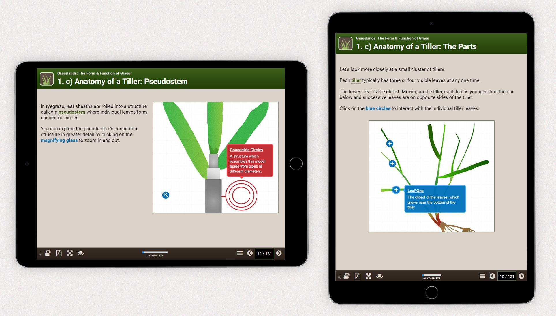 Grasslands iPad